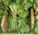 Tareh, middle eastern herb/vegetable